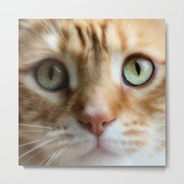 Ginger Mint Kitteh Metal Print