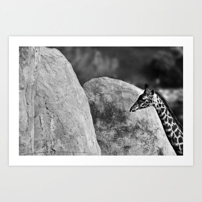 Whiteout - Giraffe Art Print
