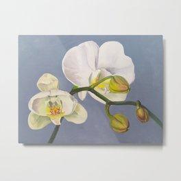 Phaelenopsis - moth orchid on blue Metal Print