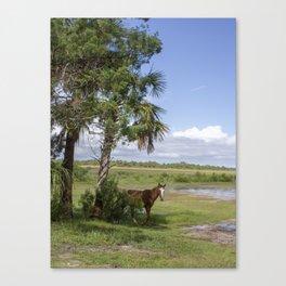 Wild Horse roams free on Cumberland Island, GA Canvas Print