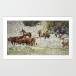 Meeting of the Herds Art Print