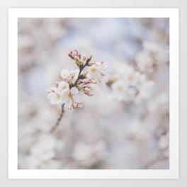 . delicate blossom . Art Print