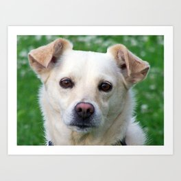Blond dog portrait Art Print