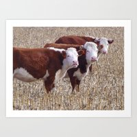 cows Art Prints featuring Cows by DownSpriggLane