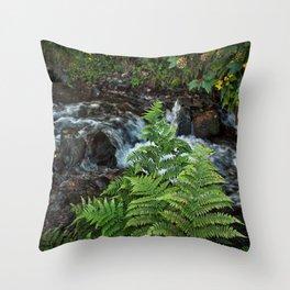 Ferns, Wahkeenah Falls, Columbia River Valley, Portland, Oregon Throw Pillow