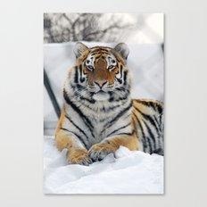 Tiger in snow Canvas Print