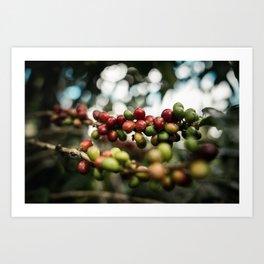 coffee cherry Art Print