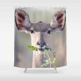 Kudu portrait Shower Curtain