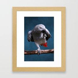 Secretive African Gray Parrot Framed Art Print
