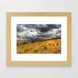 The Resting Cows Framed Art Print