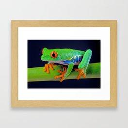 TREE FROG ON BAMBOO Framed Art Print