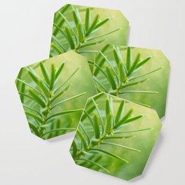 Yew foliage Coaster