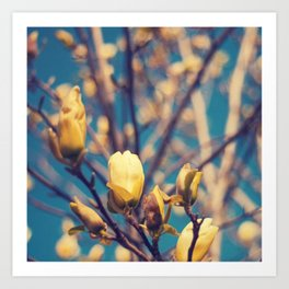 Tulip Tree Art Print