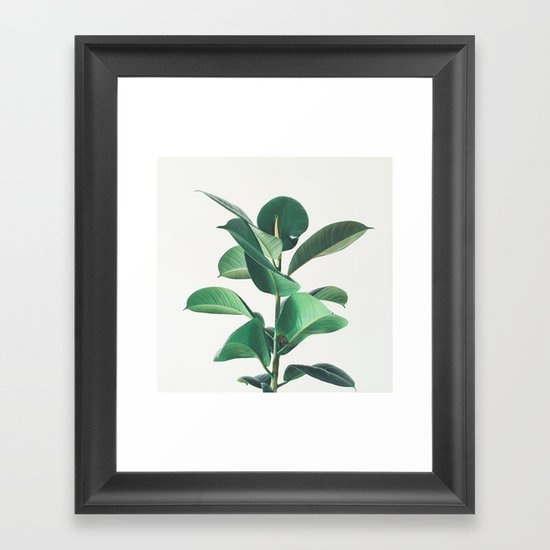 rubber fig framed art print by cassia beck society6