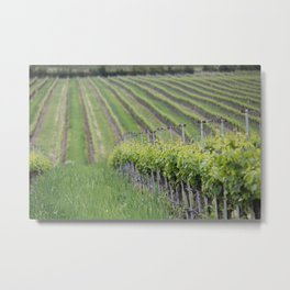 Vineyard Spring Metal Print