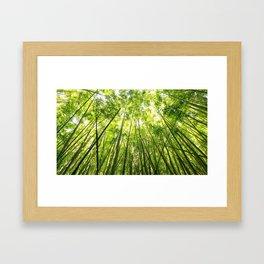 Maui Bamboo Forest Framed Art Print