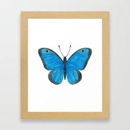 Morpho Butterfly Illustration Framed Art Print