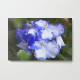 Blue Begonias Metal Print