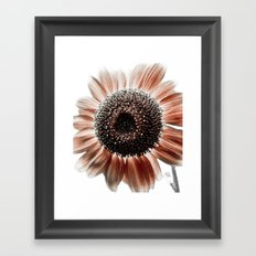Red Sunflower Head Framed Art Print