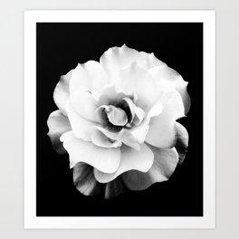 Black and White Rose Blossom... Art Print