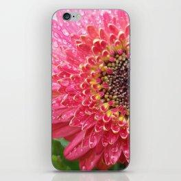 Dewey Barberton Daisy iPhone Skin