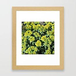 JC FloralArt 07 Framed Art Print