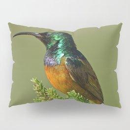 Orange Breasted Honey Bird Pillow Sham