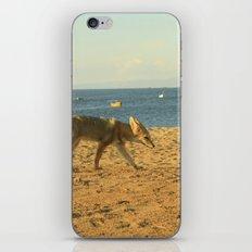 Fox on the beach iPhone & iPod Skin