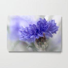Blue Beauty.....  Metal Print