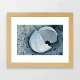 Sea Urchin Framed Art Print