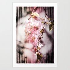 Zebra Cherry Blossom Art Print