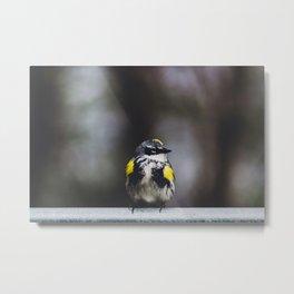 Yellow-Rumped Warbler Metal Print