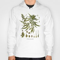 cannabis Hoodies featuring Cannabis by jbjart