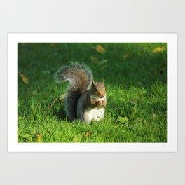 Grey Squirrel, Bute Park, Cardiff Art Print