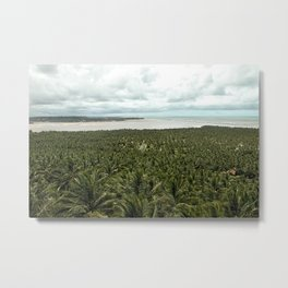 Tropical Palm Tree Forest by Sea Landscape, Gunga, Brazil Metal Print