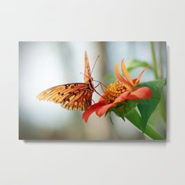 Gulf Fritillary on Mexican Sunflower Metal Print