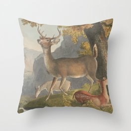 Vintage Illustration of a White Tail Deer (1830) Throw Pillow
