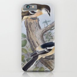 Vintage Print - The Birds of Australia (1910) - Norfolk Island Long-tailed Triller iPhone Case