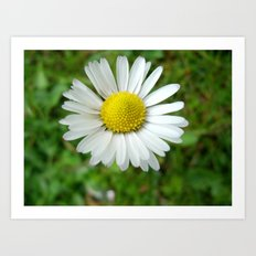 White Flower Daisy Art Print