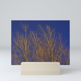 Glimmering Golden Willow Mini Art Print