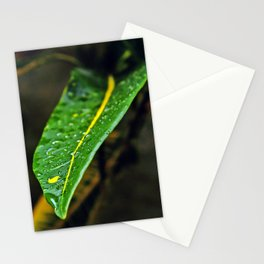 Leaf in the bush | 2010 Stationery Cards