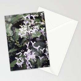 Longwood Gardens Autumn Series 232 Stationery Cards