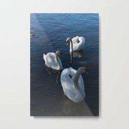 White Swans Trio Metal Print