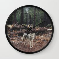 cracked Wall Clocks featuring Injured Coyote by Kevin Russ