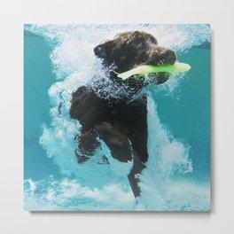 Dog Aquatic Metal Print