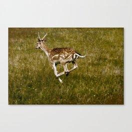 Deer on the Run Canvas Print