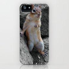 Standing Chipmunk Slim Case iPhone (5, 5s)