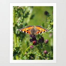 Little Tortoiseshell Buterfly Art Print