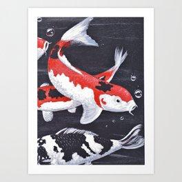 Koi carp, orange, white and black ornamental fish swimming gracefully. Art Print