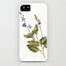 Veronica chamaedrys iPhone Case